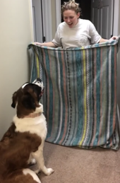 This challenged was startling their dogs by holding a blanket in front of the pet.