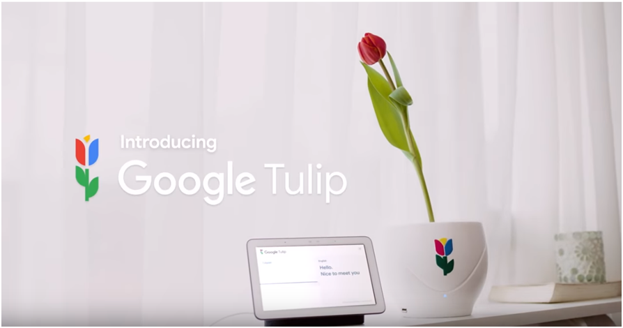 April fools day digital marketing campaigns in 2019 by Google Tulip